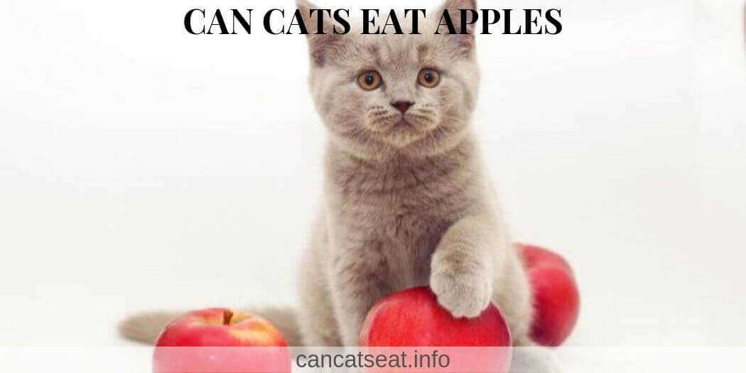 Cats and red apples