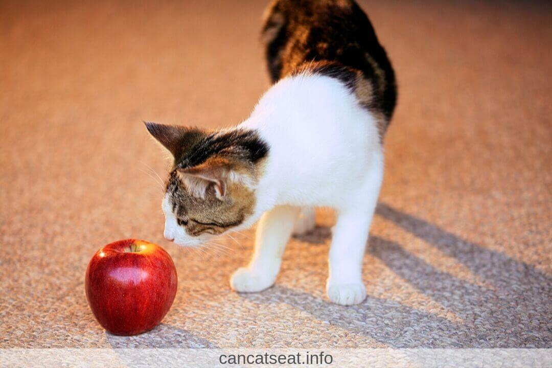 Cat playing with Apple