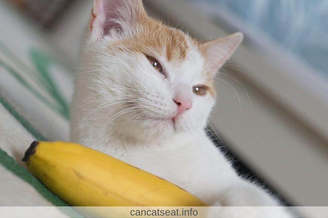 cat with banana in hand