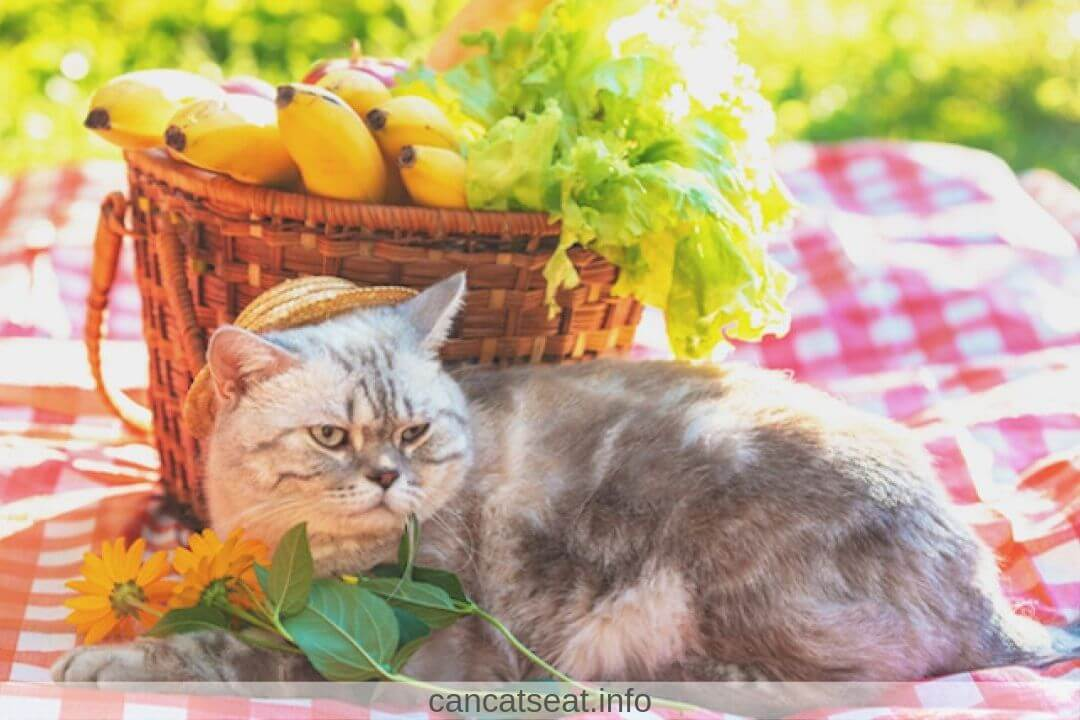 Cat with banana's basket
