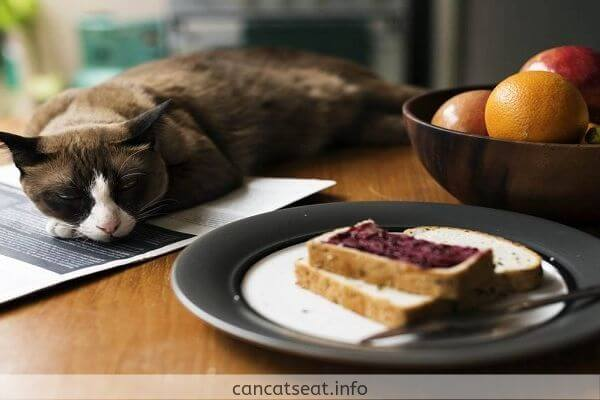 Cat with Bread slices