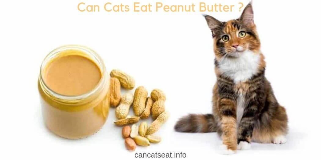 Can cats eat peanut butter? Well, the answer to this question is not as simple as it looks.