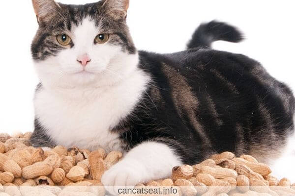 Cat on a peanuts