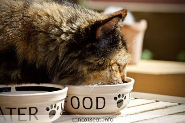 cat eating in a white bowl