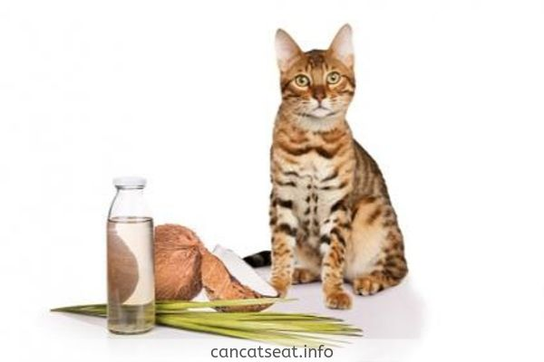 cat with coconut oil