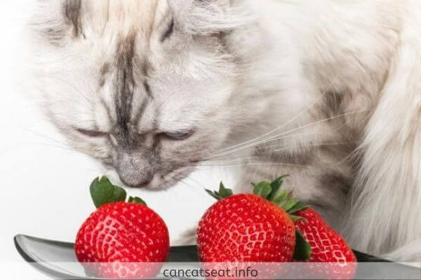 kitten with strawberry