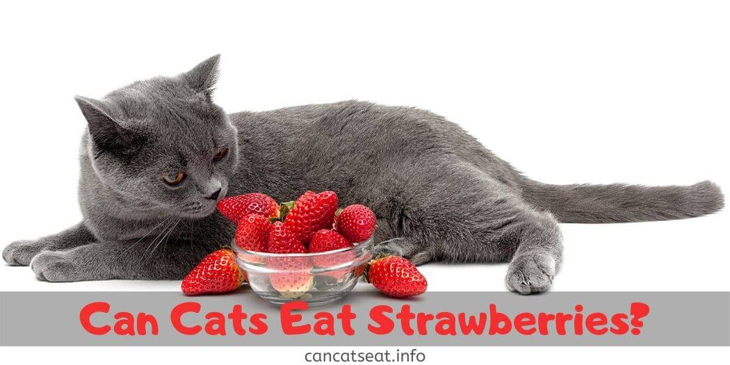 cat with a bunch of strawberries