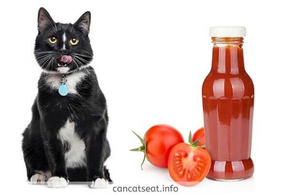 cat with tomato ketchup