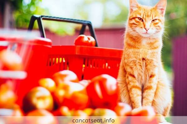 cat with red ripe tomatoes