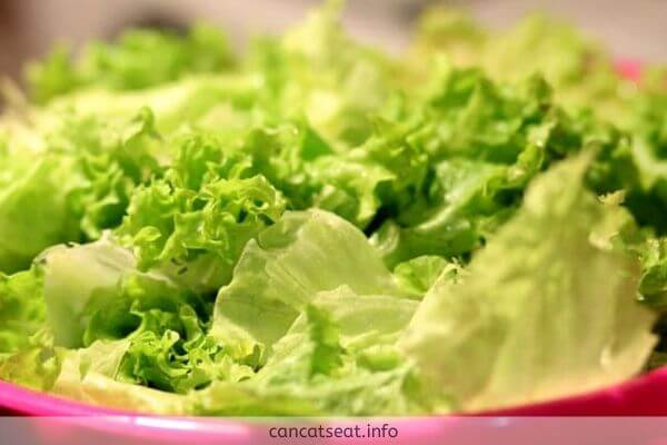 Nutrition Of Cats From Lettuce