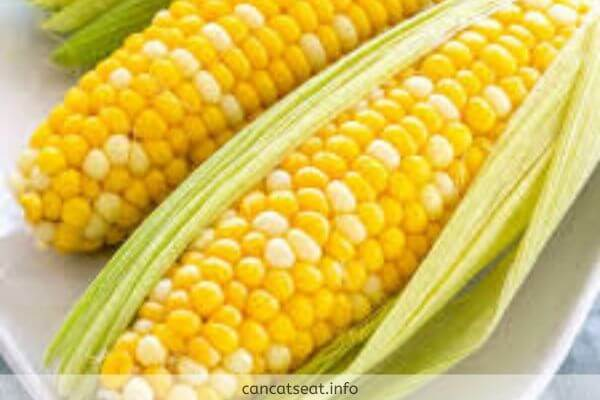 Yellow Fresh Corns with leaves