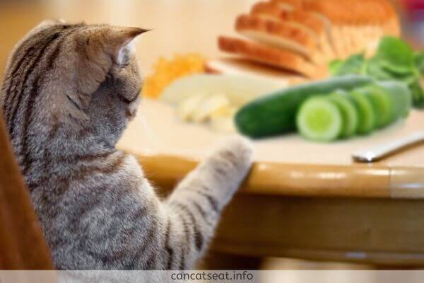 Cat eating cucumber on a Dinner Table