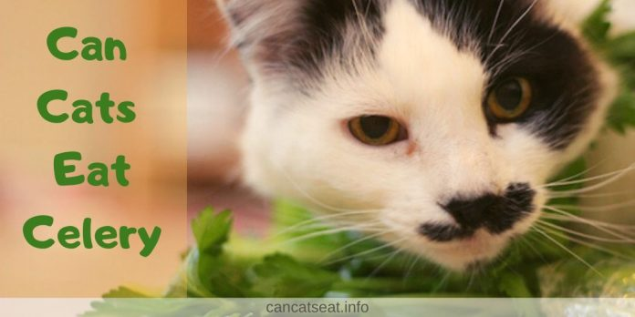can cats eat celery safely