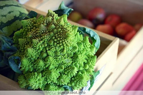 Fresh Green Broccoli For cats