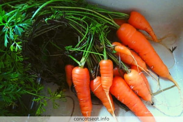 Nutrition Of Carrots