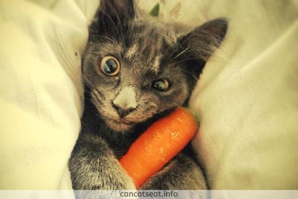 cat have carrot in hand