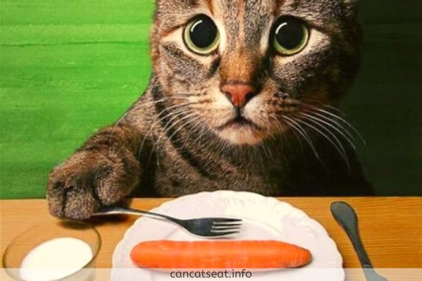 cat eating carrot in a plate