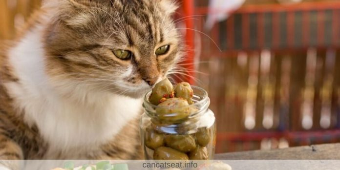 Can-Cats-Eat-Olives