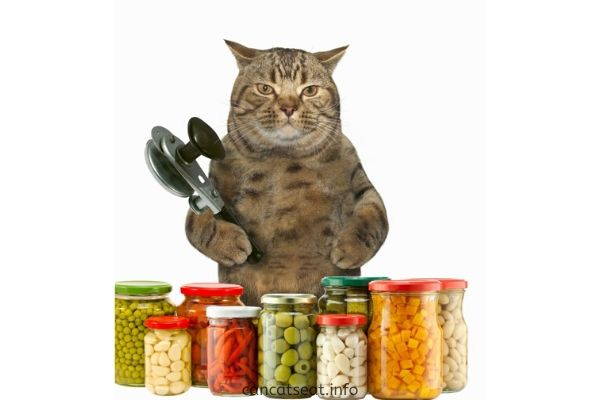 Can-Cats-Have-Olives