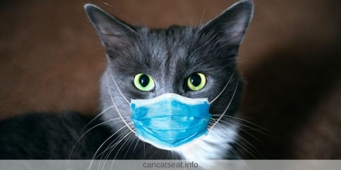 can cats spread coronavirus